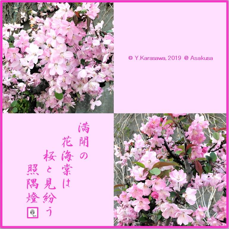 190417花海棠LRG