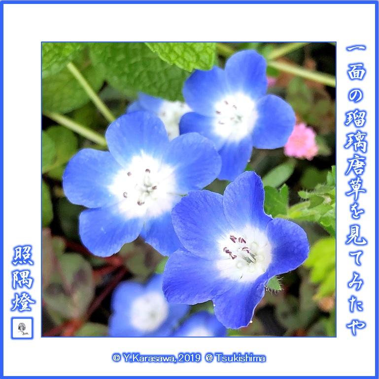 190506瑠璃唐草LRG