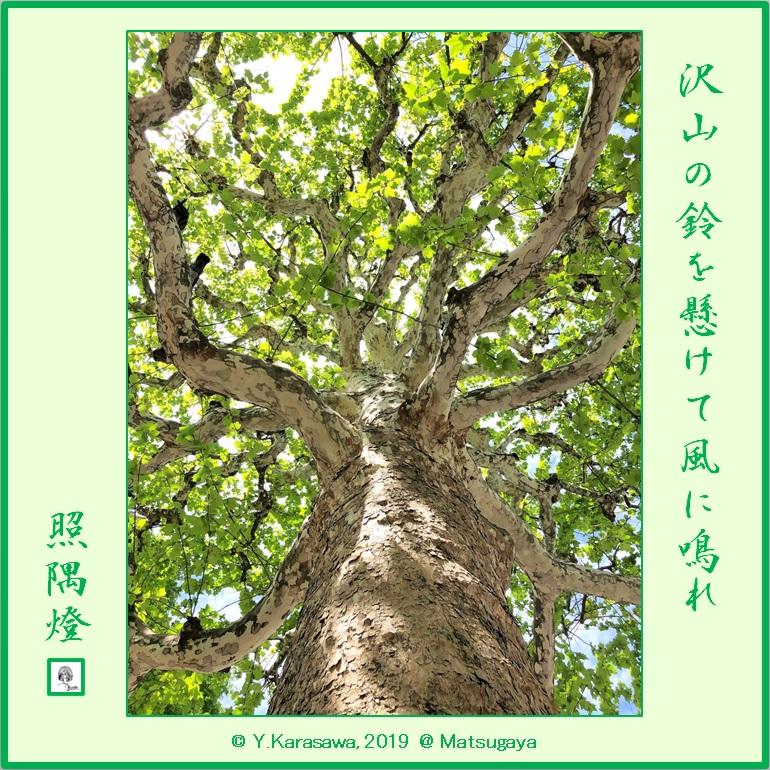 190522鈴懸の木LRG