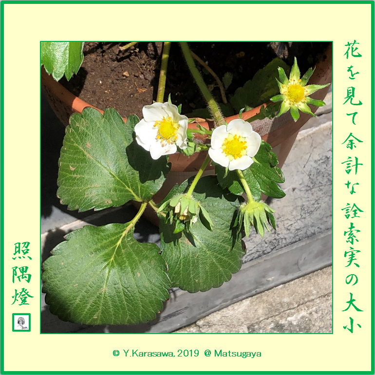 190523苺の花LRG