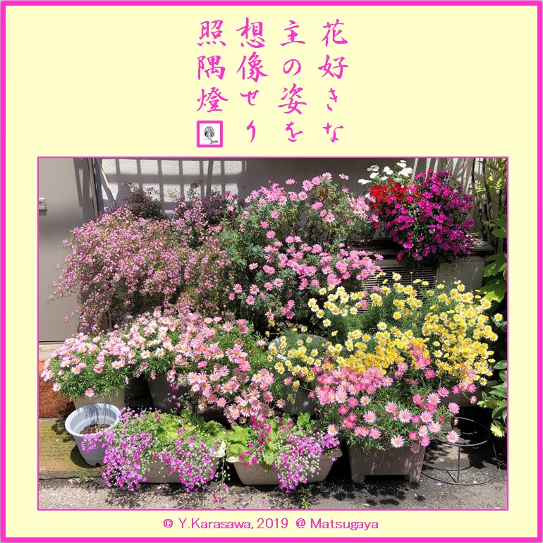 190526玄関横の花1
