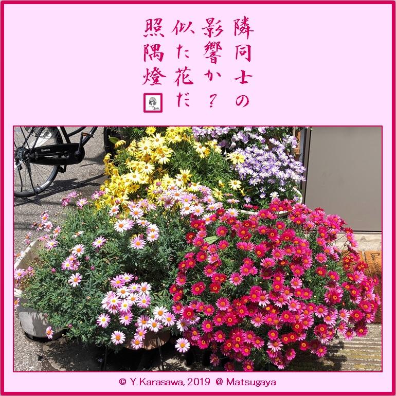 190527玄関横の花2LRG