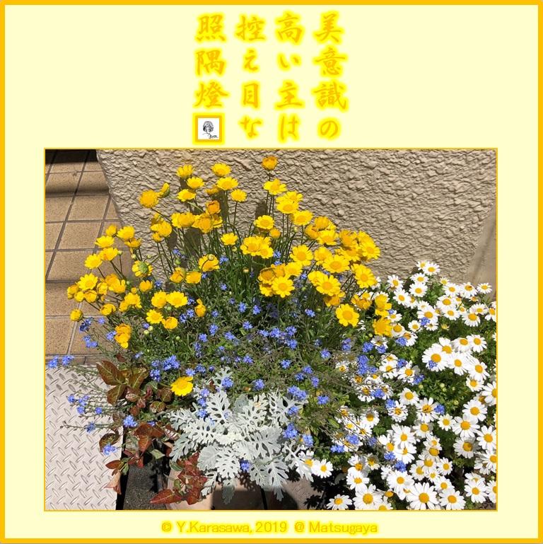 190528玄関横の花3LRG