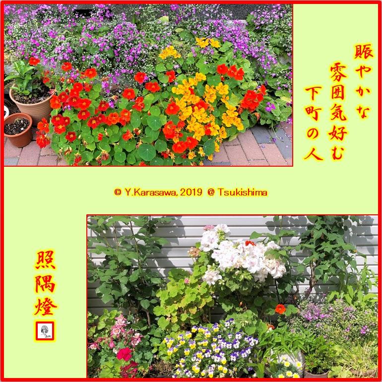 190529玄関横の花々4LRG