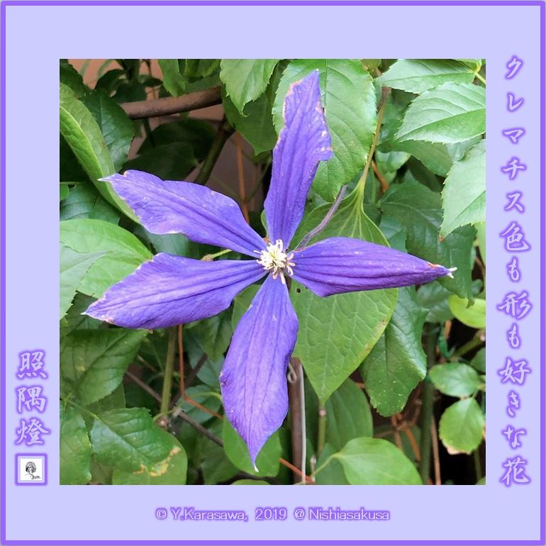 190626紫のクレマチスLRG