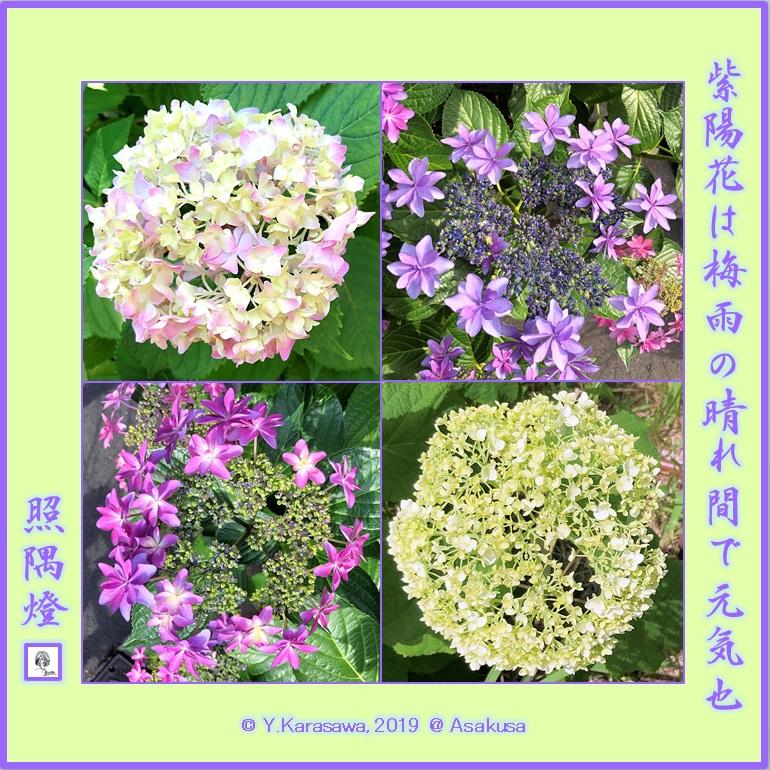 190627紫陽花LRG