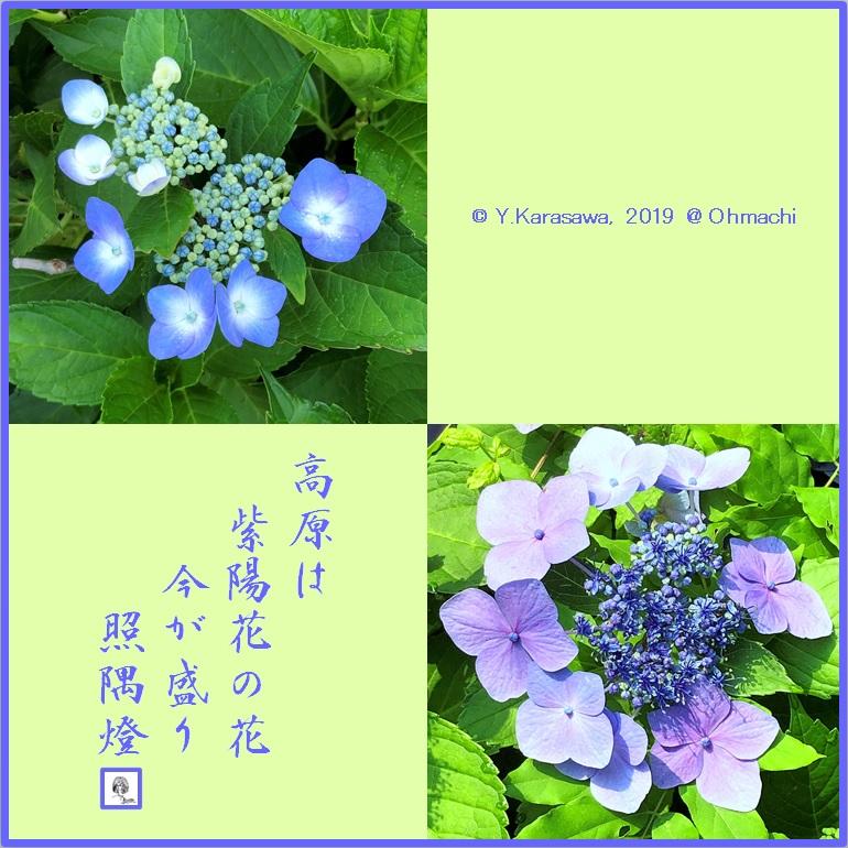 190811紫陽花LRG
