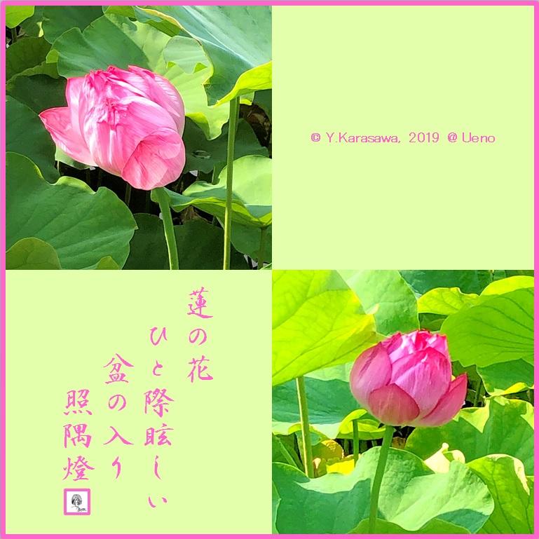 190813蓮の花LRG