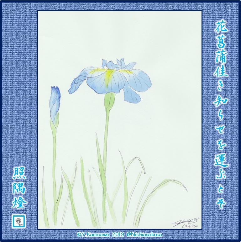 191008花菖蒲LRG