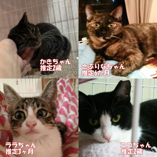 1028cats2.jpg