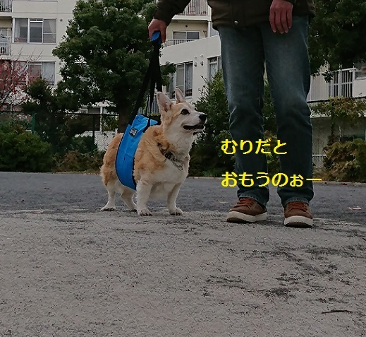 DSC_2550[1]