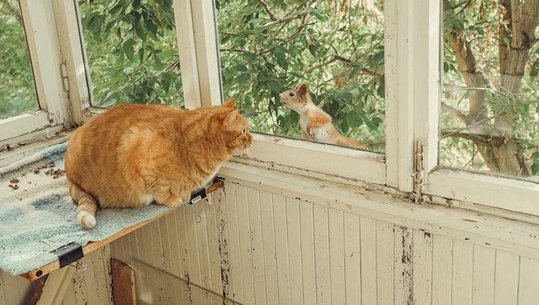 猫と リスの 会話