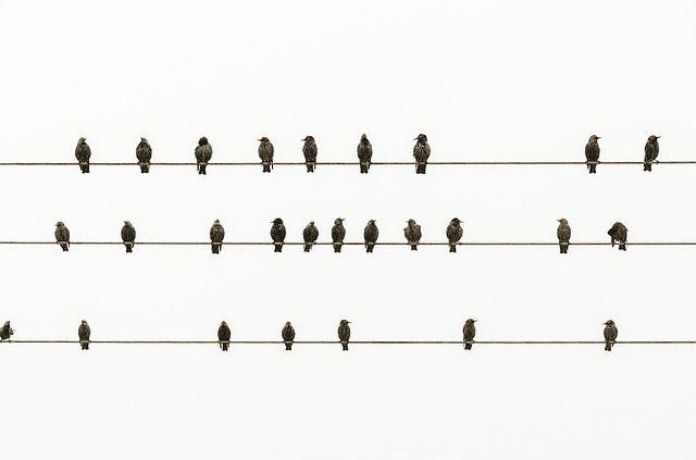 電線に止まる鳥は何匹?