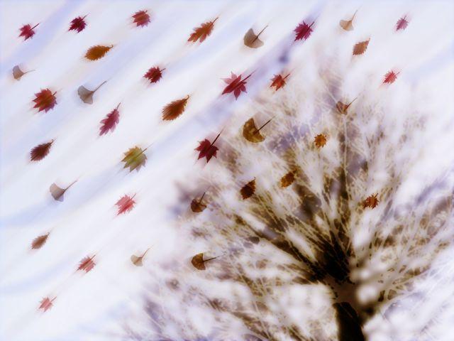 「木枯らし1号」が吹くのは東京と近畿地方だけである?