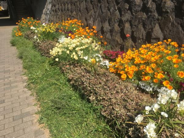 川沿いの遊歩道花