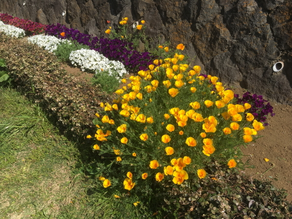 遊歩道花壇