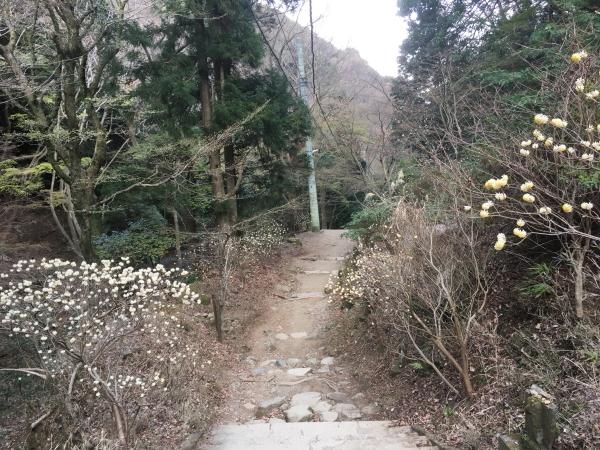 20190406Koboyama101.jpg