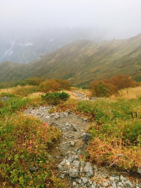 0550 低い木の中の登山道