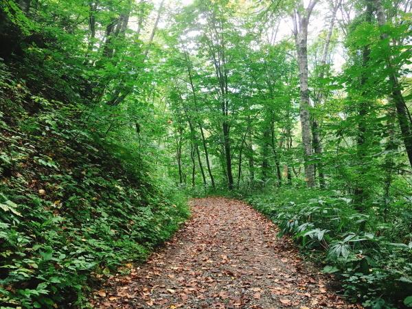 0925樹林の中の林道