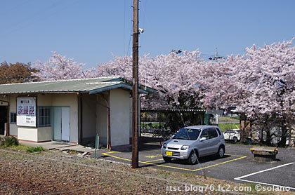 大垣から一駅の樽見鉄道・東大垣駅。桜が満開