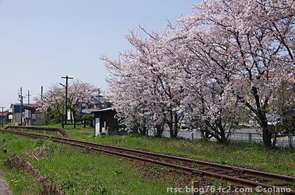 樽見鉄道・美江寺駅、レール沿いの桜並木が満開