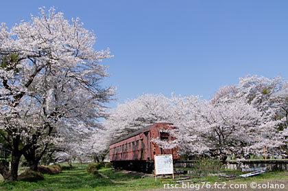 桜咲く谷汲口駅、保存車両の国鉄旧型客車・オハフ33