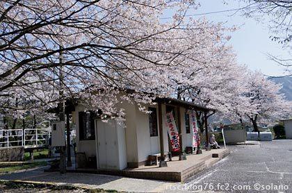 桜満開の樽見鉄道・谷汲口駅の駅舎