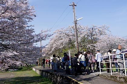 樽見鉄道・谷汲口駅、桜ダイヤが実施され大賑わい