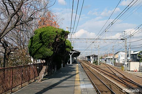 南海・浜寺公園駅3番線、柿の木植えられたプラットホーム端
