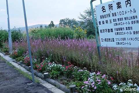 JR飯山線・越後岩沢駅、プラットホームの花壇