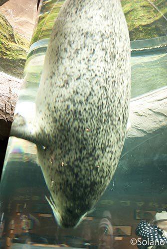 旭山動物園、あざらしの水槽
