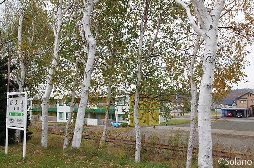 JR富良野線・美瑛駅、ホームに立ち並ぶ秋色の白樺並木