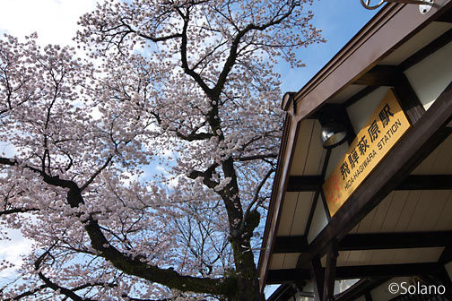 JR東海・高山本線・飛騨萩原駅の木造駅舎と満開の桜