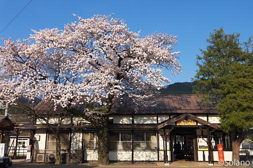 高山本線・飛騨萩原駅、夕日浴びる桜と木造駅舎