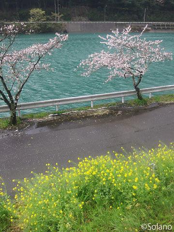 肥薩線、球磨川沿いの海路駅、桜と菜の花が花盛り