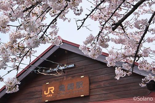 武豊線・亀崎駅、現役最古という木造駅舎と満開の桜