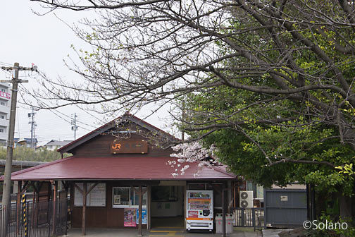 武豊線・亀崎駅、枯れた??駅前の桜
