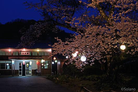 島根県江津市、三江線・川平駅、提灯ともる夜桜風景