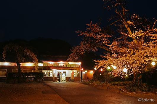 三江線・川平駅、駅前の桜が見事な夜桜風景