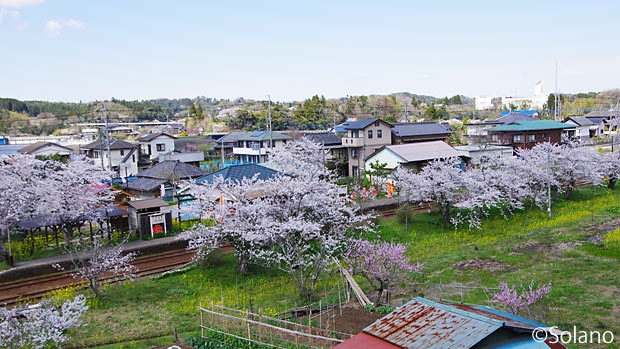 4月の小港鉄道、満開の桜に包まれる高滝駅を見下ろす