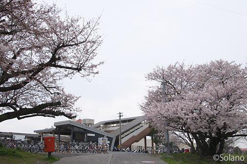 武豊線、乙川駅と桜の坂