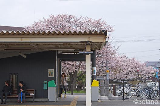 武豊線・乙川駅、簡易駅舎と見事な桜の大木