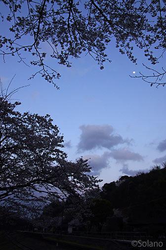 肥薩線・大畑駅、月明かりで愉しむ秘境駅の夜桜