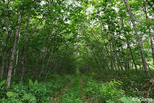 原野に還りつつある標津線廃線跡、中標津‐上武佐間。