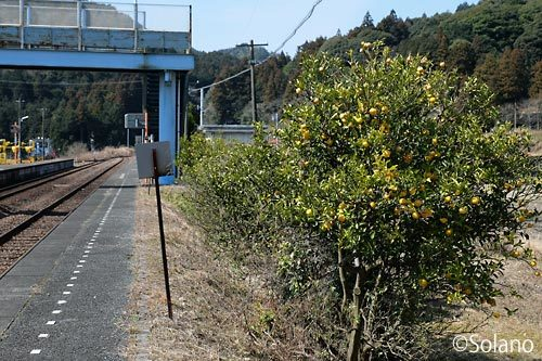 JR西日本・美祢線、柚子並木が印象的な渋木駅