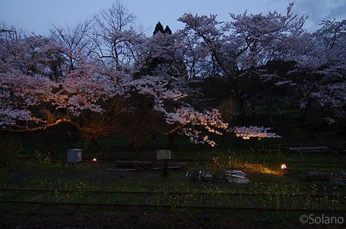 小湊鉄道、ライトアップされ浮かび上がる月崎駅の夜桜