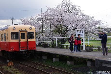 小湊鉄道・馬立駅、桜をバックに記念撮影する家族