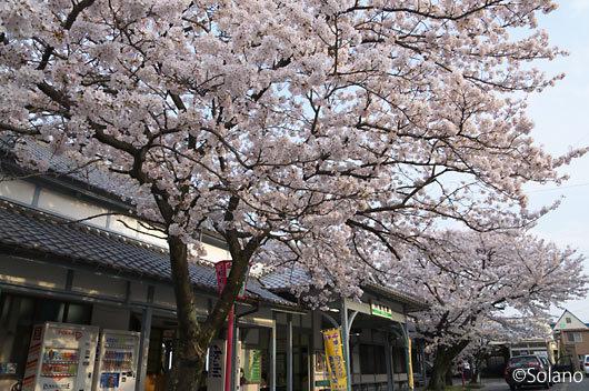 養老鉄道・養老駅、満開の桜と大正の洋風木造駅舎