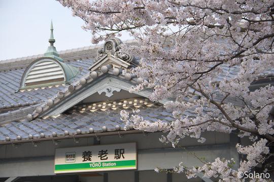 養老鉄道・養老駅、木造駅舎の屋根瓦に桜が映える