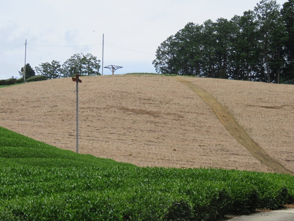 s-茶畑用地